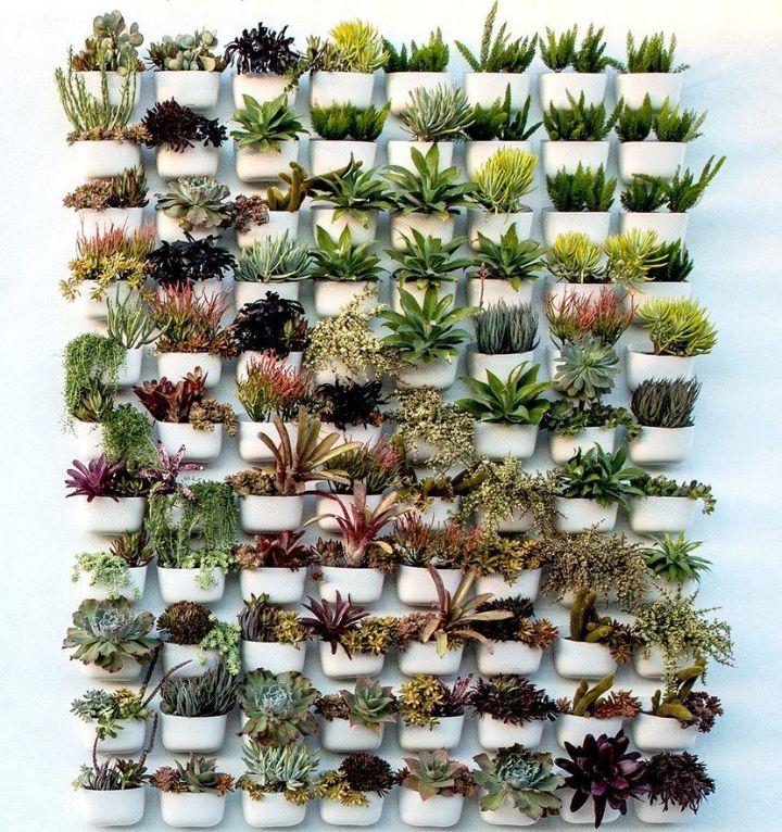 plant wall amazon