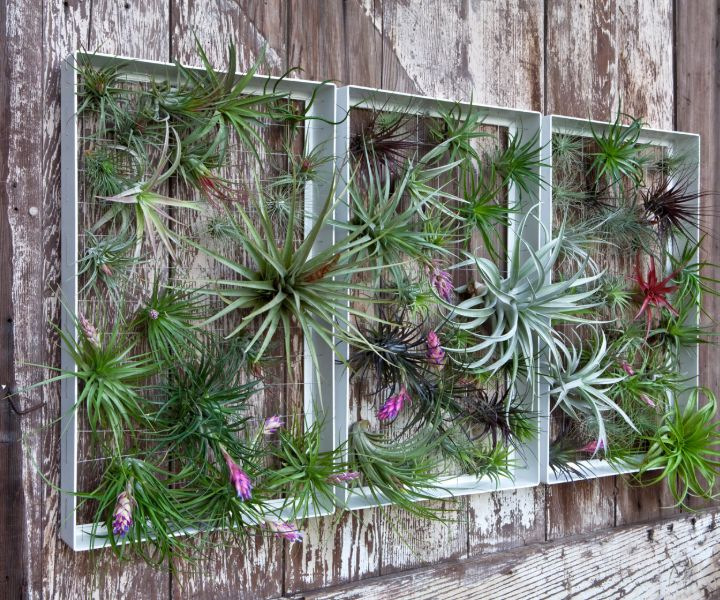 plant wall feature