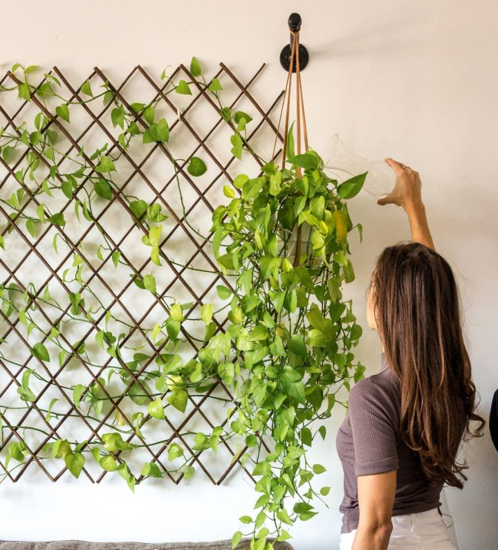 plant wall fence