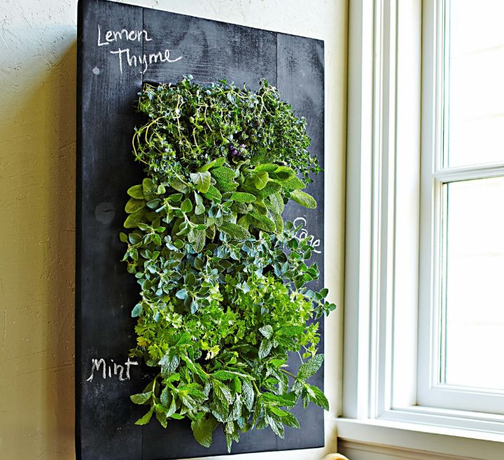 plant wall guide