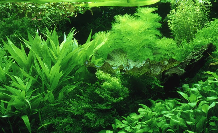 plants for jarrarium