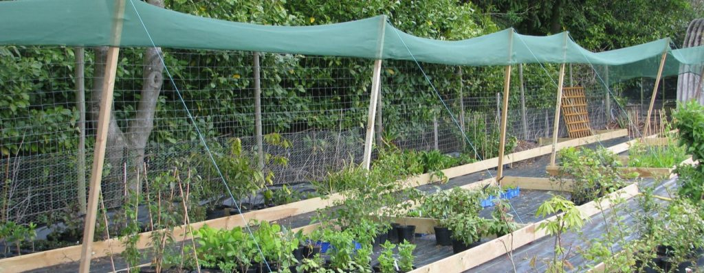 plants under shade cloth