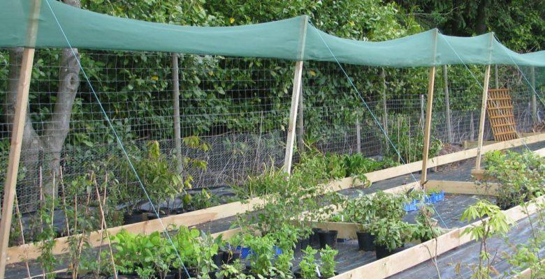 plants under shade cloth