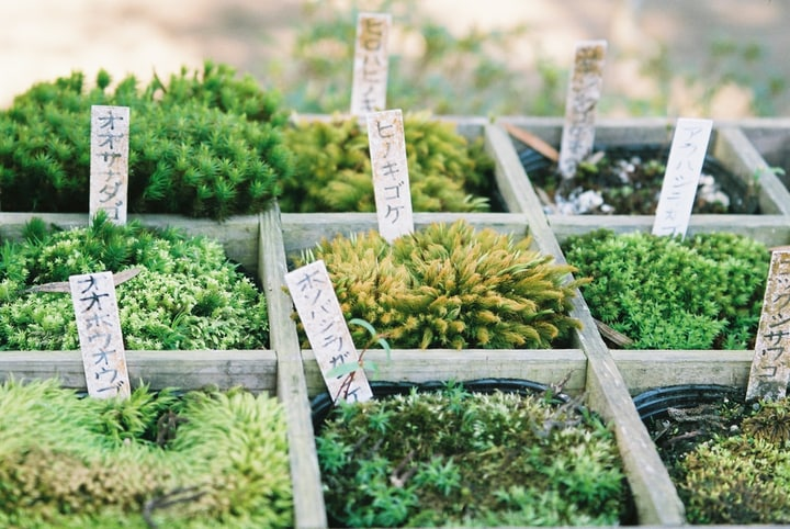 selecting moss for the garden