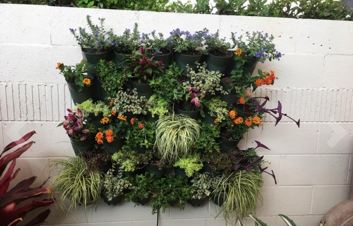 self watering outdoor living planted wall