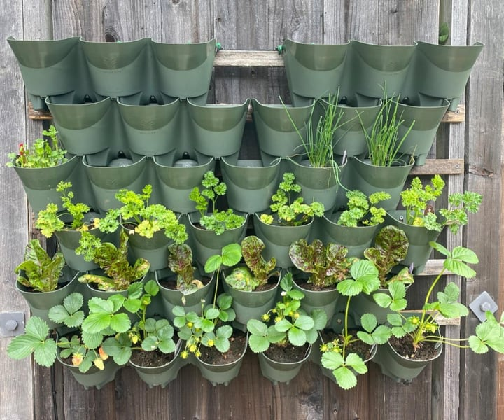 simple outdoor planted wall