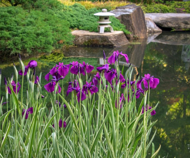 spring gardening images