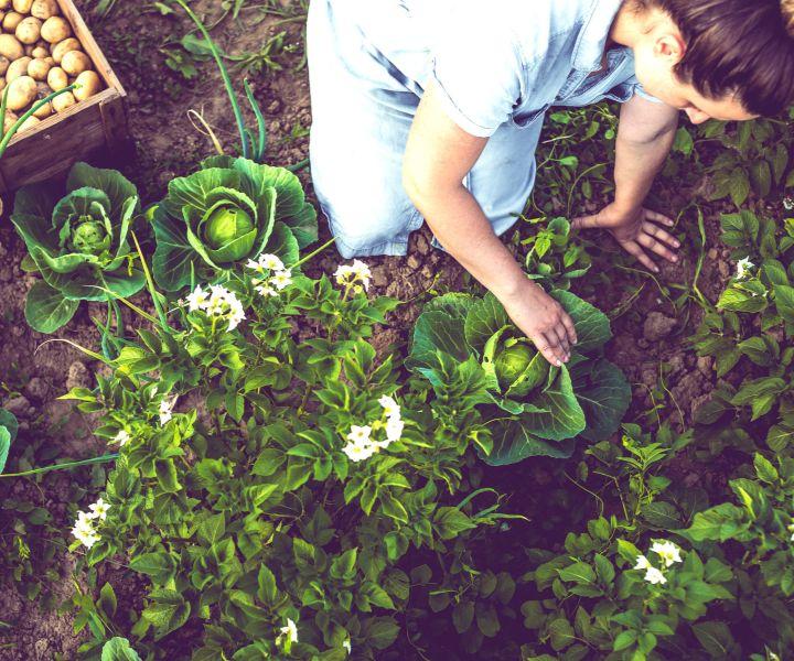 spring gardening vegetables