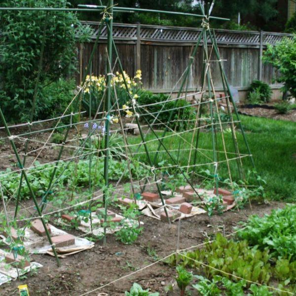 spring vegetable garden in the backyard