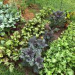 vegetable spring gardening