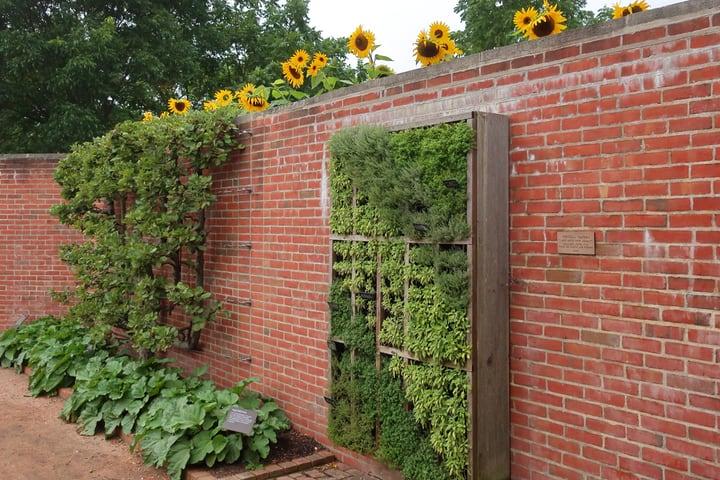 vertical garden on brick wall