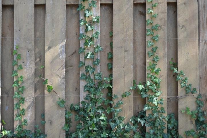 vine wall garden