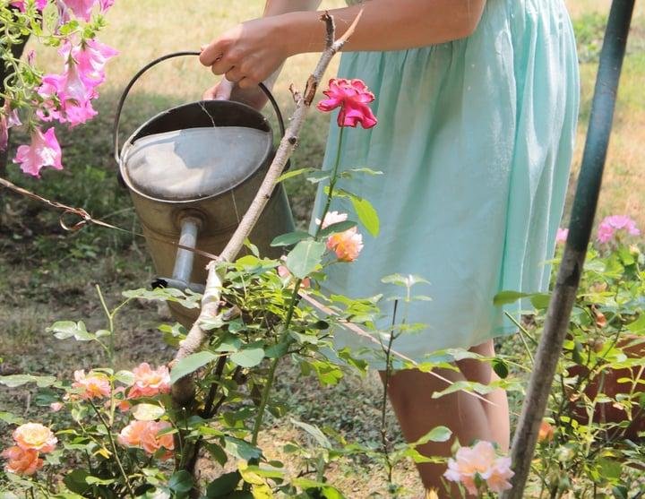 woman watering roses