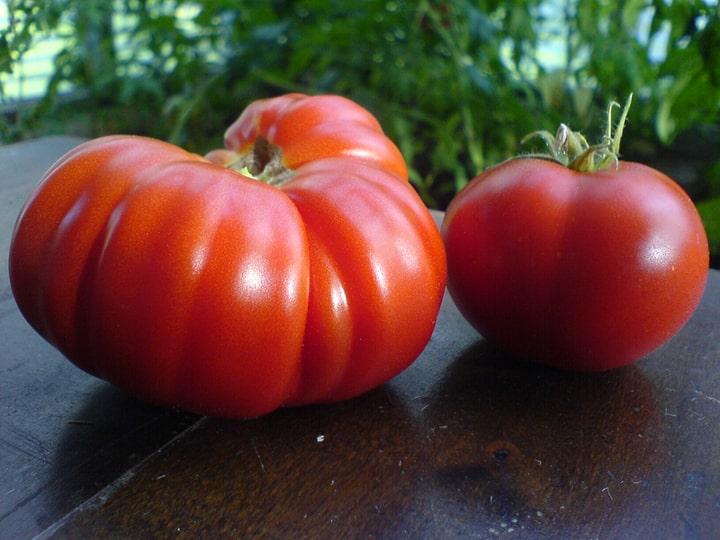 costoluto genovese heirloom tomatoes