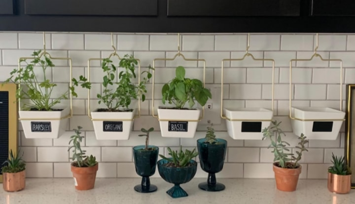 hanging herb planters in the kitchen