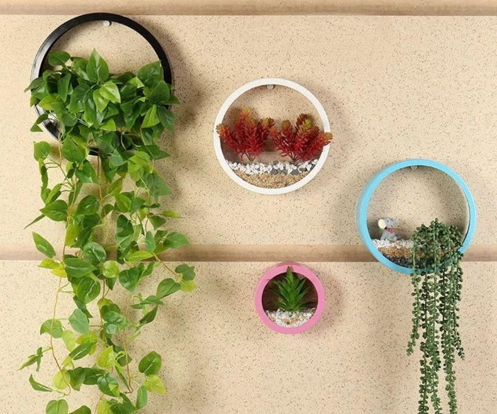 hanging wall planters for succulents