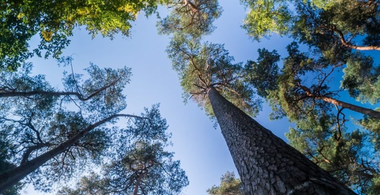 looking up a different types of treees