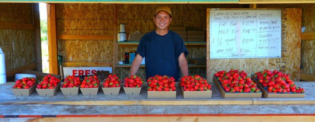 market gardening berries