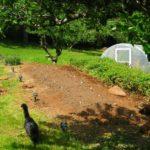prepared land for market gardening