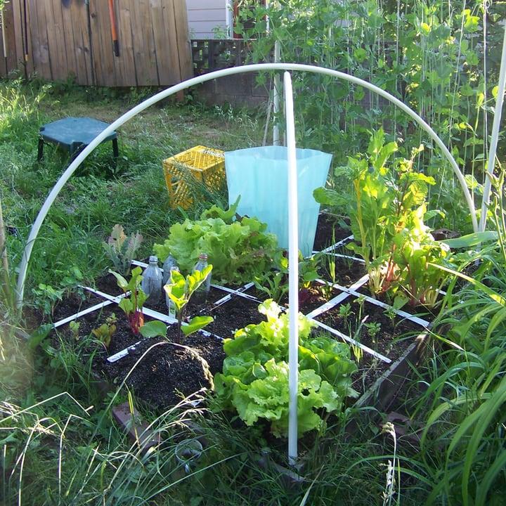 salad mix market gardening