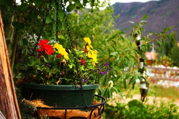seasonal flowers on hanging planter