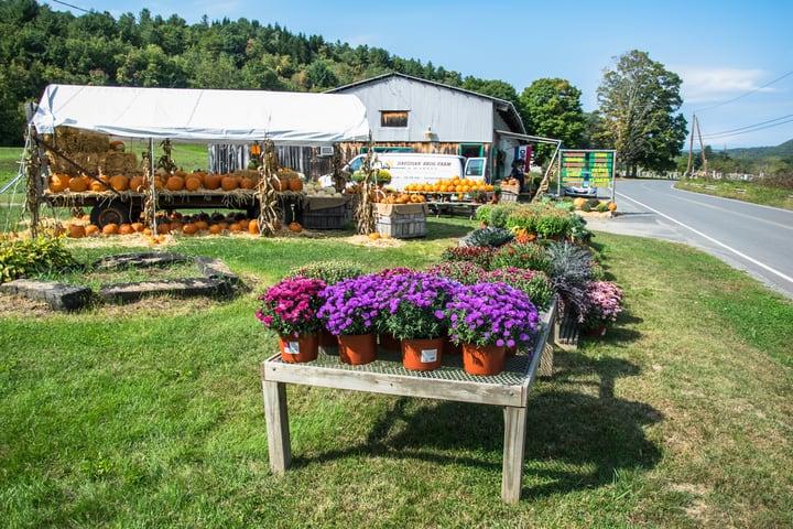 successful market gardening