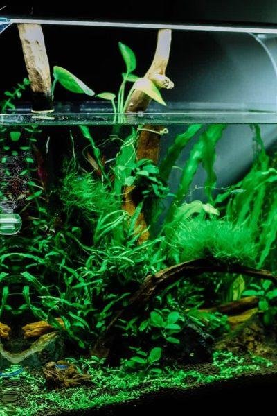 Planted Aquarium Easy DIY Guide
