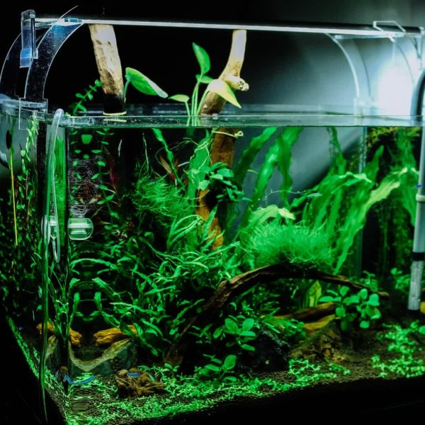 Planted Aquarium Easy DIY Guide