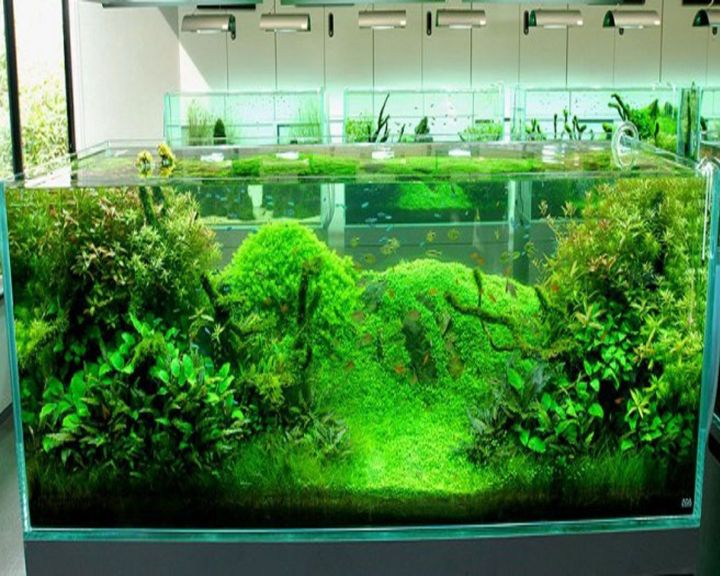 alga aquascape
