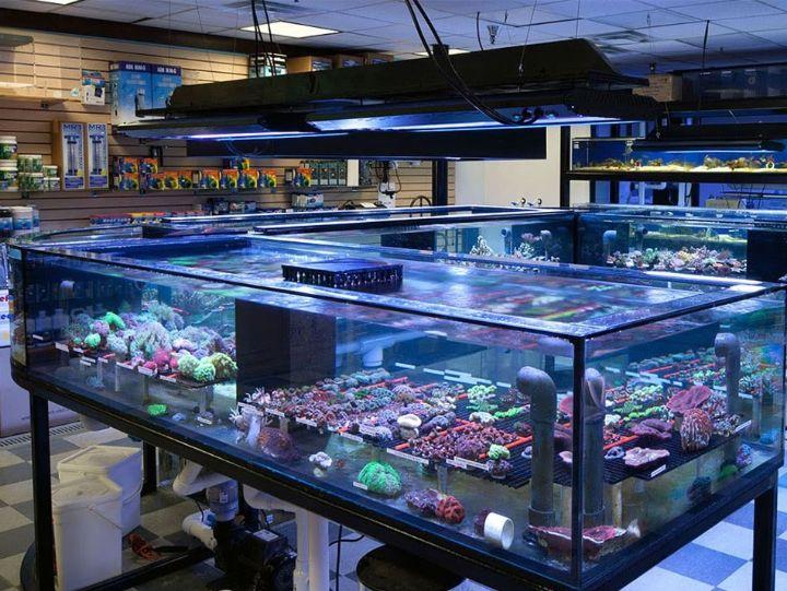 aquarium tank style