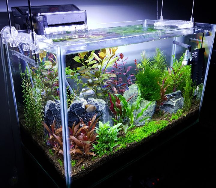 aquascaping gallon