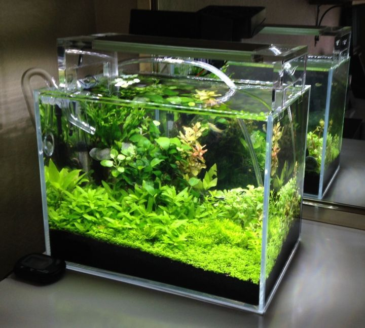 aquascaping beginner