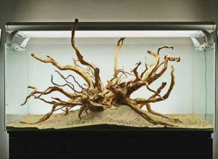 aquascaping driftwood