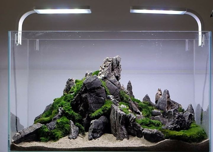 aquascaping iwagumi