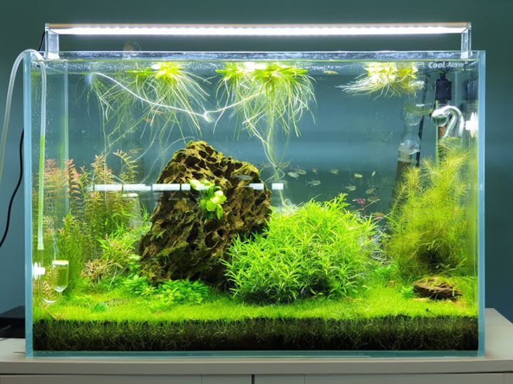 aquascaping plants