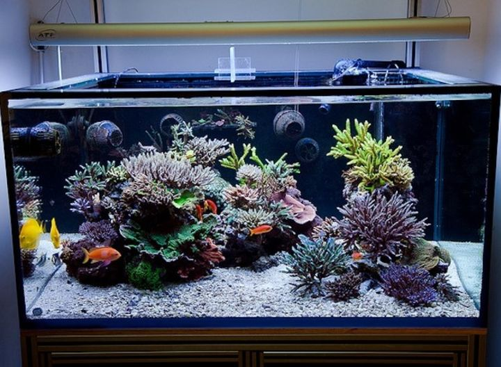 aquascaping reef tank