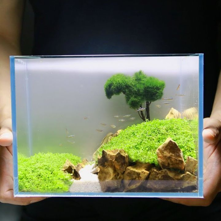aquascaping tank