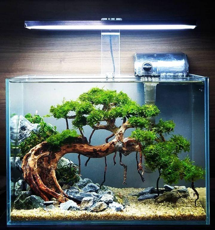 bonsai tank aquascaping