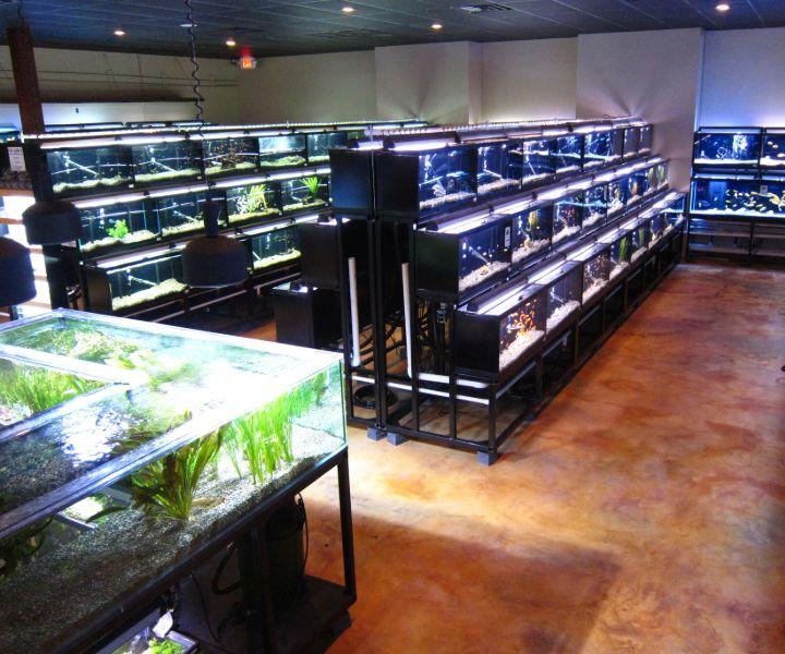 decide on aquarium tank