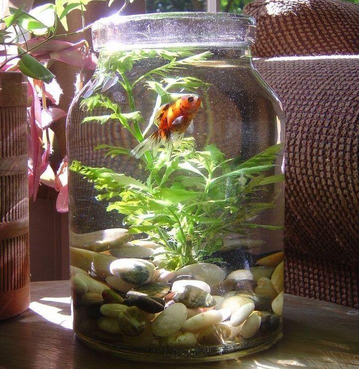 diy small aquascaping