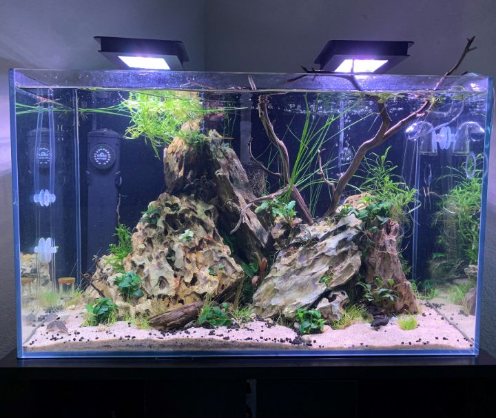dragon stone aquascaping
