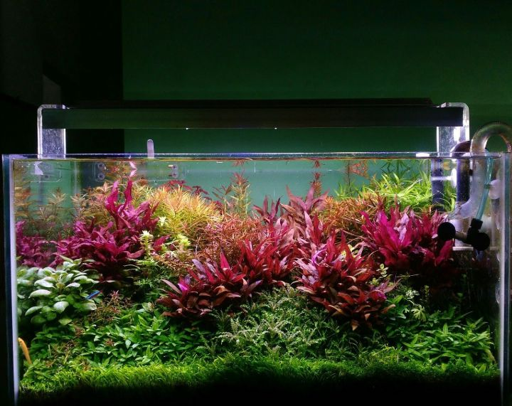 dutch aquascape