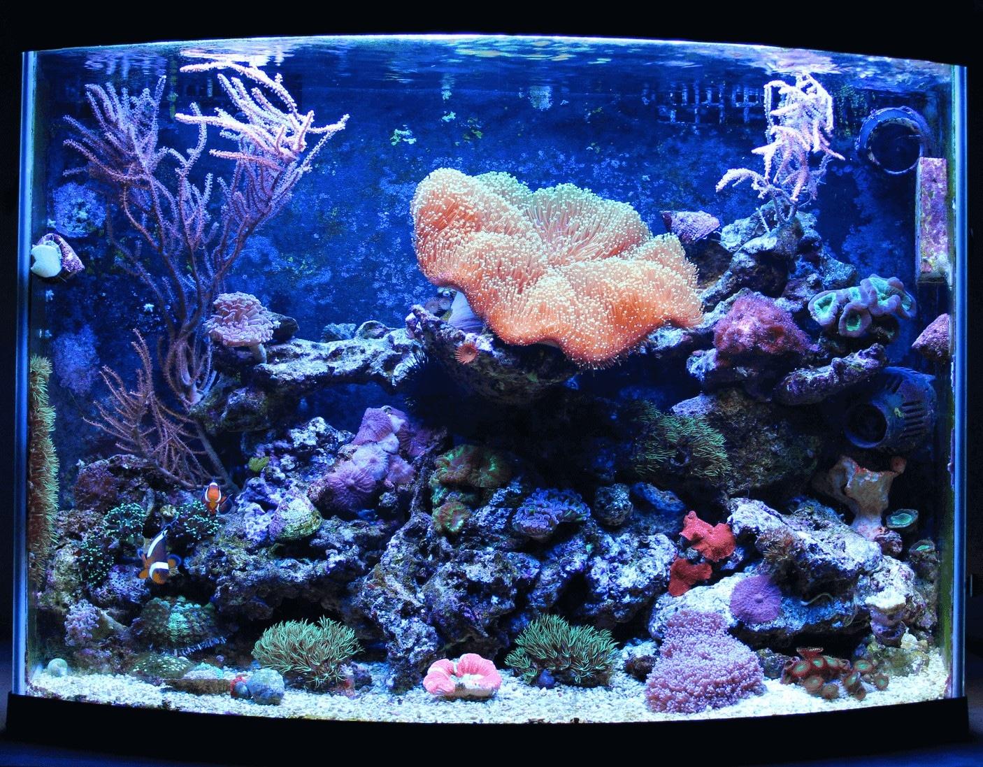 fish aquarium decors