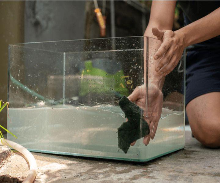 fish aquarium maitenance