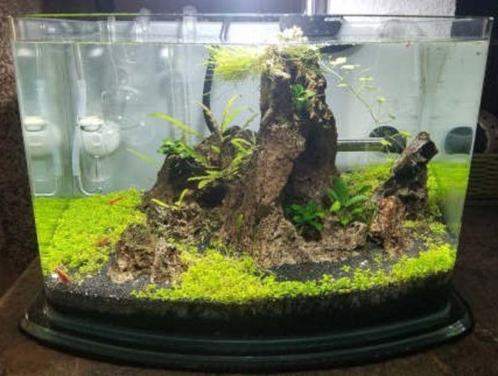 floating leaf aquascaping