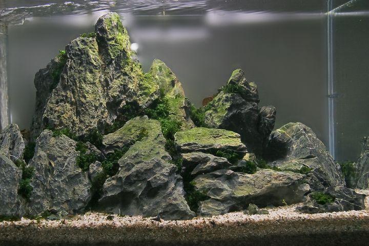iwagumi aquascaping style