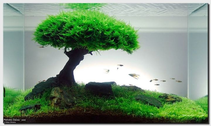 iwagumi mini aquascape