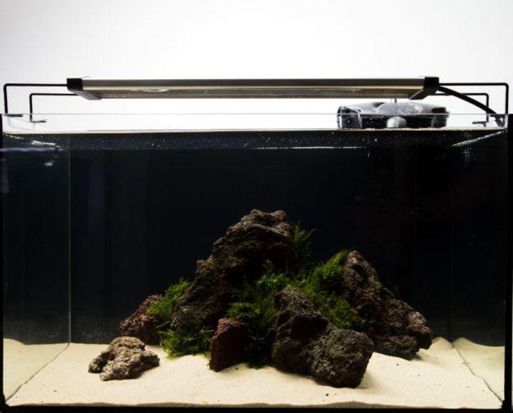 low budget aquascaping