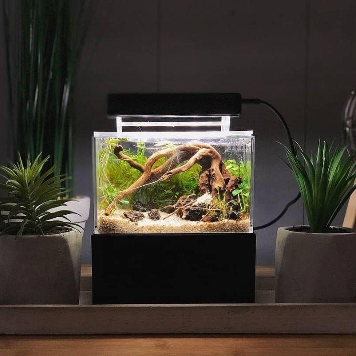 mini complete tank aquascape