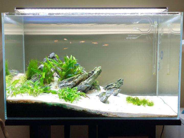 minimalist aquascaping fresh water